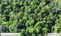 AP news report on orangutan forest prompts response