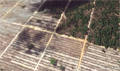 Apical update confirms NDPE companies linked to deforestation