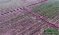 APRIL keeps option of plantation development in peatlands on the table