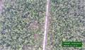 BGA confirms no new peat planting in orangutan habitat