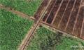 Cargill develops new plantations in peat ecosystem complex