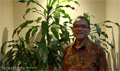 FSC warned to respect Indonesia's new peat regulations