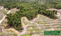 No further deforestation by palm oil company in West Papua