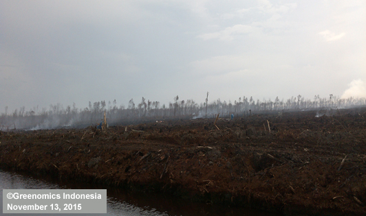 Photos of 2015's burned peat in pulp giant concessions reinforce President's warning