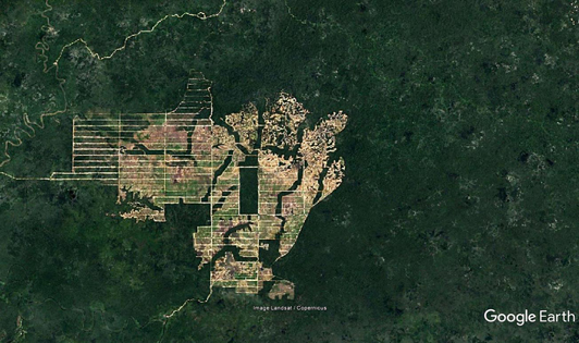 Astra retains link to supplier with 'busy years ahead' clearing Papua's forest