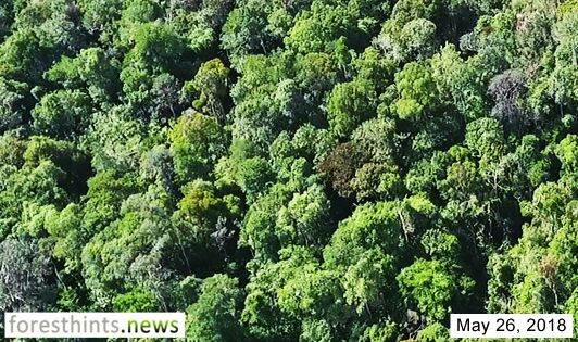 AP news report on orangutan forest prompts response