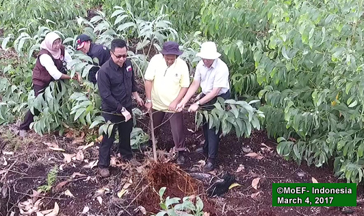 Acacia removed in Kampar Peninsula after inaction by pulp giant