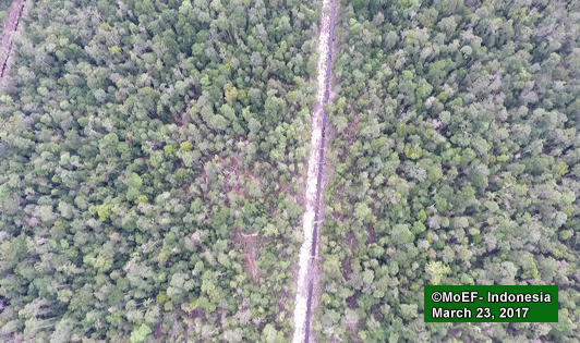 BGA confirms no new peat planting in orangutan habitat