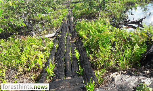 USD21.7 million channeled to governors for peat restoration