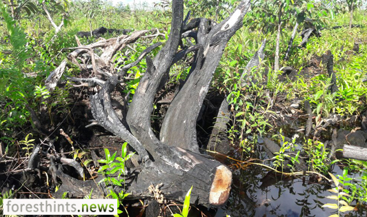 USD43 million of peat agency budget unspent