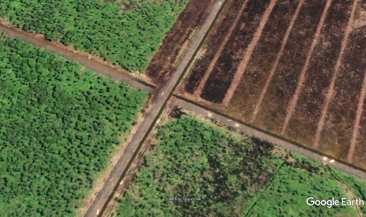 Cargill develops new plantations in peat ecosystem complex