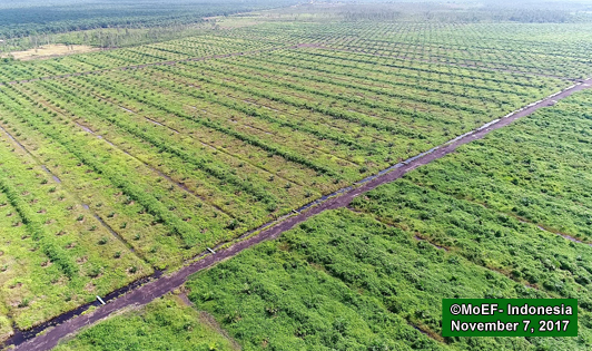Govt shares photos of Cargill's new plantations in peat ecosystem