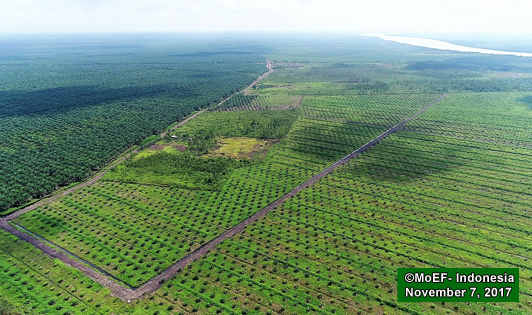 Norwegian embassy implicitly confirms Cargill concession lies in peatlands