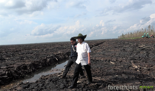 Top officials investigate extent of palm oil company's peatland violations