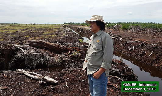 Govt indicates giant agribusiness group linked to illegal peat exploitation