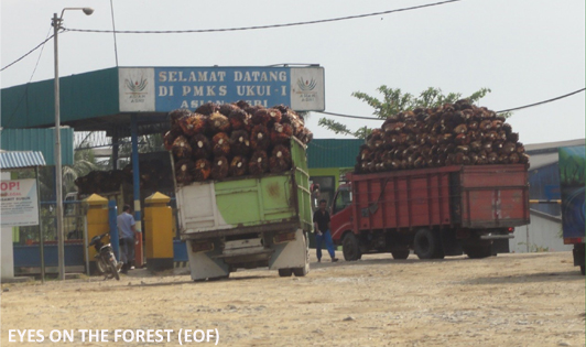 Report finds palm oil giants and multinationals tainted by illegal palm oil supply chain
