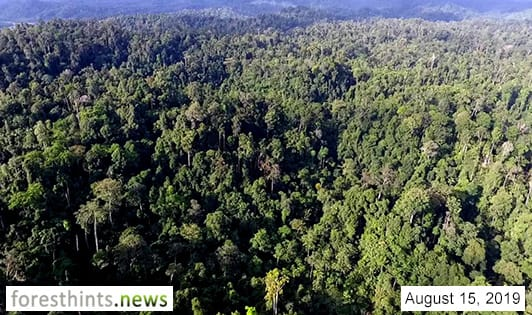 Protection forests removed from moratorium map