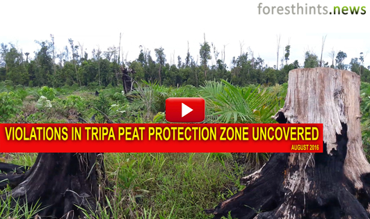 Violations in Tripa peat protection zone uncovered