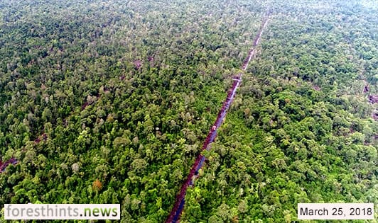 GAMA changes stance towards Bornean orangutan forests