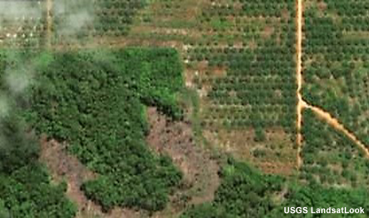 Independent audit essential to learn truth about loss of HCS forest, says NGO