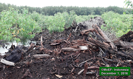 Pulp giant replanting burned peat must face full force of law, urges frontline alliance