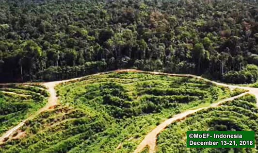 Worry EU move may prompt Jakarta to lift palm oil moratorium