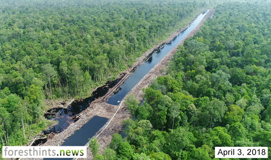 Photos portray latest situation in Sungai Putri landscape