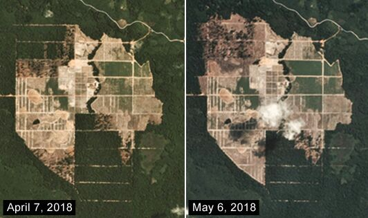 Bulldozing of orangutan habitat continues in front of our eyes