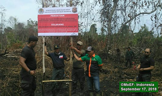 Ex-Triputra concession in Bornean orangutan habitat sealed