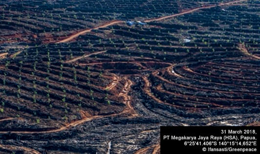 Greenpeace report exposes impact of permits from SBY regime