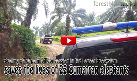 VIDEO: Swift action by minister in Leuser Ecosystem saves 22 Sumatran elephants