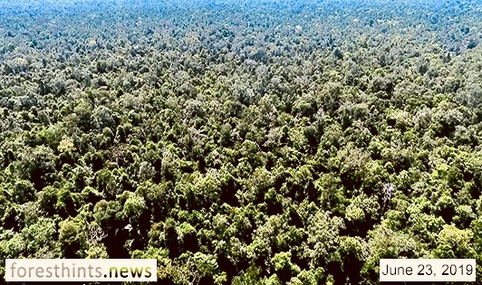 Moratorium unlocked to return palm oil concession to national park