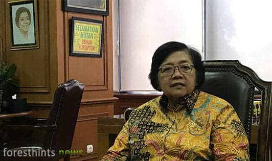 Minister details permanent moratorium on primary forest, peat