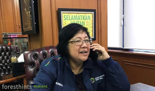 Minister sanctions palm oil company in Leuser Ecosystem