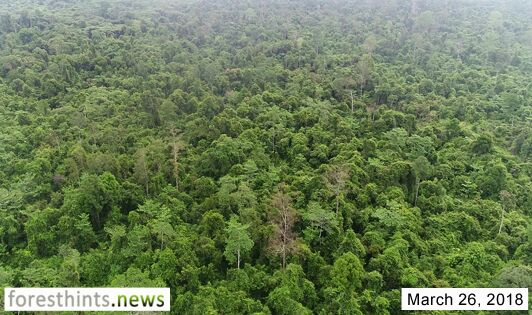 Business group sells concession containing peat forests and orangutans