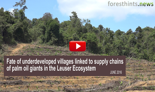 VIDEO: Fate of underdeveloped villages linked to supply chains of palm oil giants in the Leuser Ecosystem