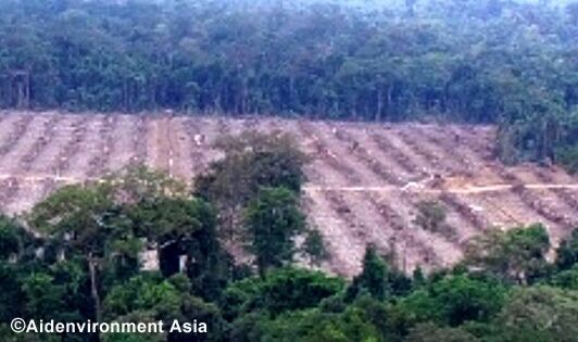 Unilever undeniably linked to removal of Bornean orangutan habitat