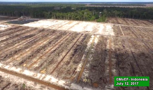 Unilever buying CPO from peat forest destroying mills