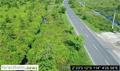 LiDAR analysis blunder viewable from trans-Kalimantan highway