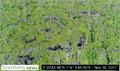 WRI-coordinated LiDAR mapping disregards new peat regulations
