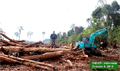 Minister orders investigation of two illegal forestry cases