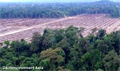 Photos highlight level of Bornean orangutan habitat destruction
