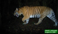 Doubling of Sumatran tiger population as part of enhanced climate action