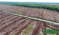 Environmental NGOs call on APP not to continue operations in drained peatlands
