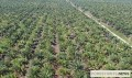 Indonesia's 2020 palm oil export value rises in the face of global pandemic