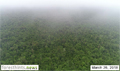 Video depicts orangutan peat forests in recently sold Triputra concession