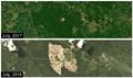One-year long destruction of orangutan habitat highlighted