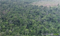 Remaining Sime Darby HCS forests saved from targeted clearing